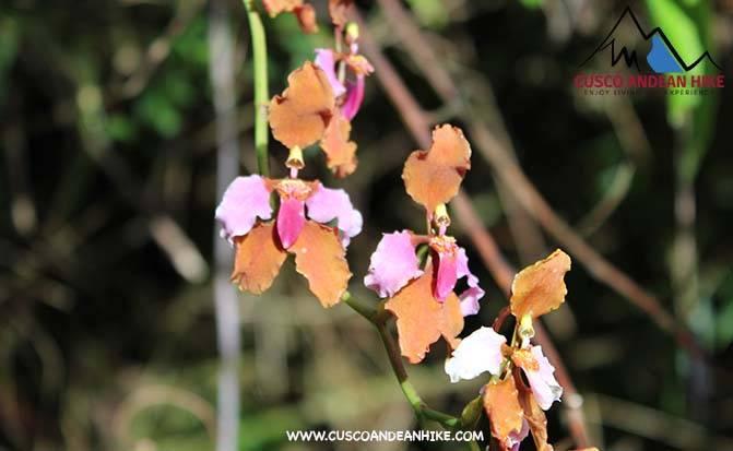 ORQUIDEAS DE MACHU PICCHU ORCHIDS OF THE INCA TRAIL