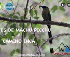 AVES DE MACHU PICCHU – CAMINO INCA
