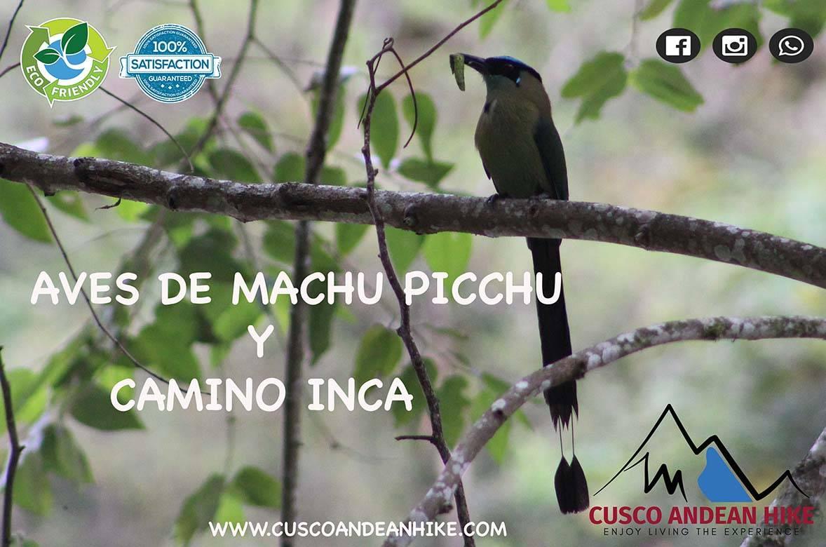 AVES DE MACHU PICCHU Y CSMINO INCA CUSCO ANDEAN HIKE