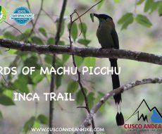 BIRDS IN MACHU PICCHU – INCA TRAIL