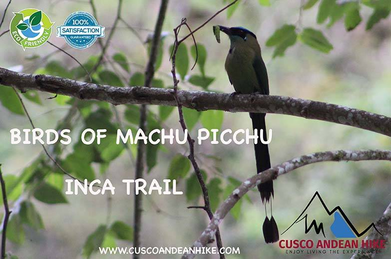 BIRDS IN MACHU PICCHU and INCA TRAIL CUSCO ANDEAN HIKE